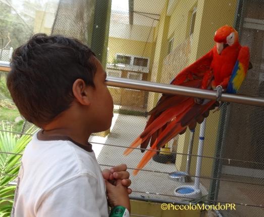 Aviario La Marquesa