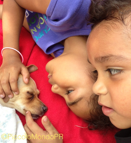Chispa y los chiquillos