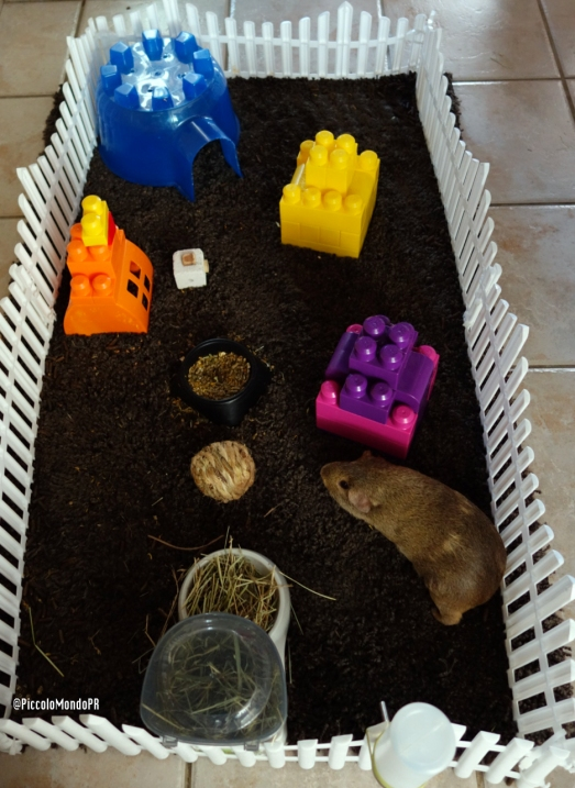 PAncho Guinea PIG space