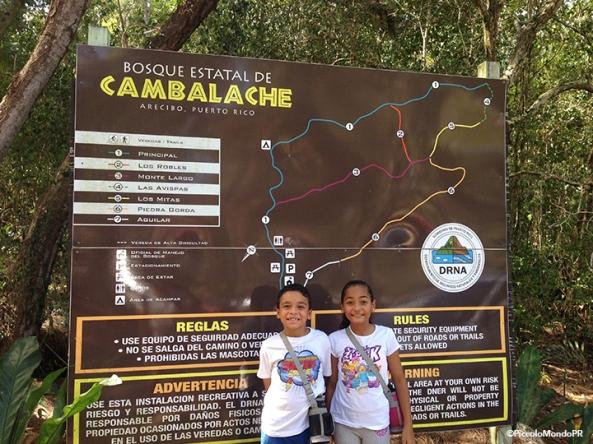 Bosque Cambalache 1