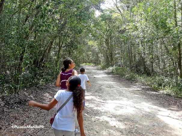 Bosque Cambalache 10
