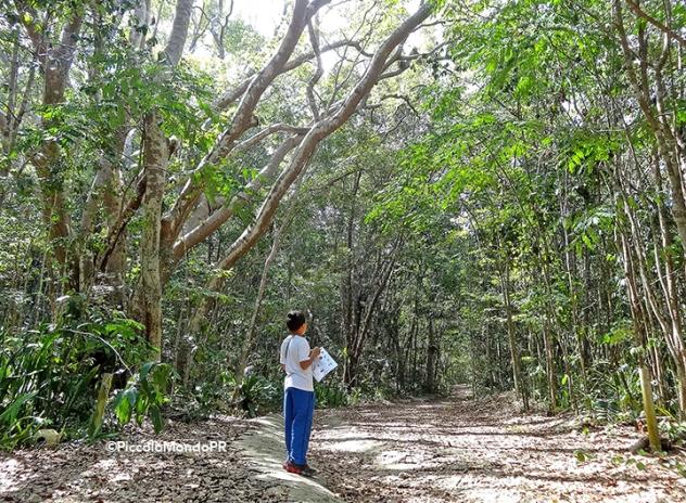 Bosque Cambalache 13