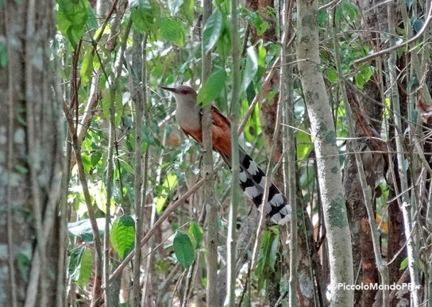 Bosque Cambalache 19