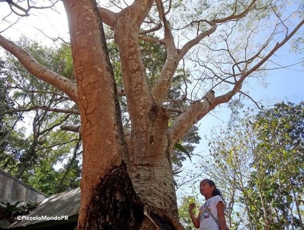 Bosque Cambalache 6