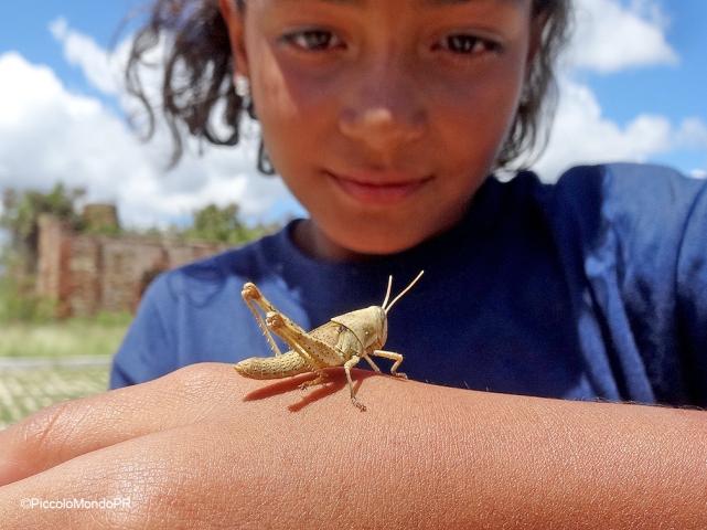 Insectos Mariana