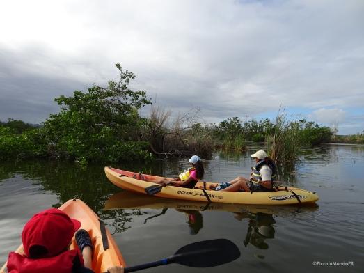 caño tiburones Arecibo Kayak PMPR