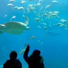 Georgia aquarium 3 PM