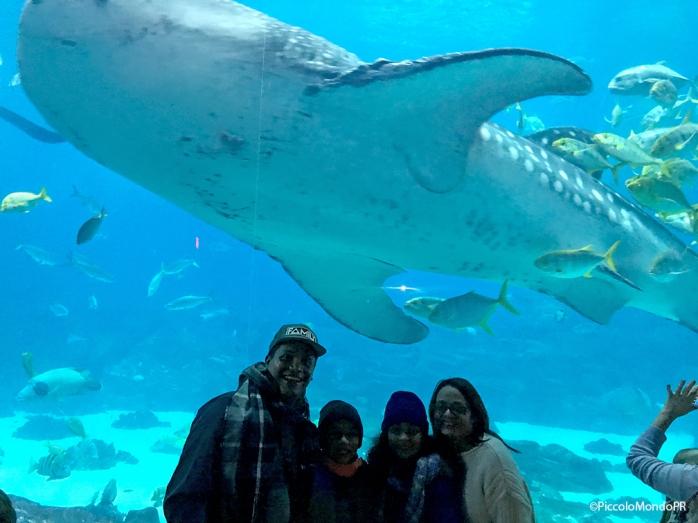 Georgia aquarium 4 PM