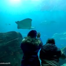Georgia aquarium 5 PM