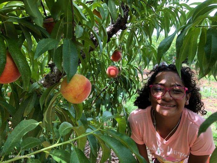 Greggs Peach Farm 4 PM